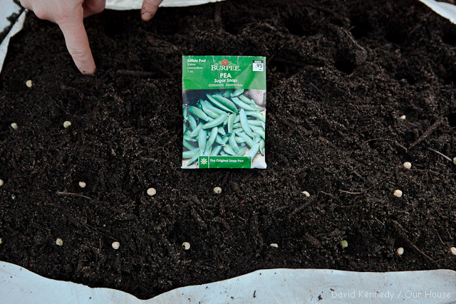 Pushing the seeds into the soil.